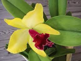 I confetti non sono compresi. Conosciamo Le Orchidee Le Piu Diffuse In Commercio