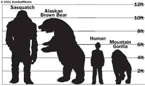 New Bigfoot Information
