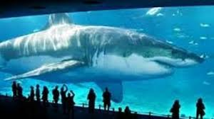 megalodon shark still alive proof 2015.  Proof Real MEGALODON SHARK Sightings  Largest Sharks Ever Are Still Alive  Video Dailymotion With Megalodon Shark Proof 2015 M