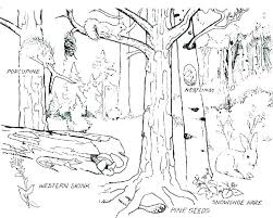 Tropical Rainforest Coloring Page Forest Coloring Pages Printable