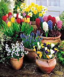 Small Picture Best 25 Bulbs ideas on Pinterest Planting bulbs Spring bulbs