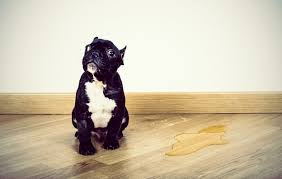 how to remove dog urine smell from hardwood floors