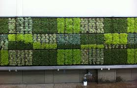 Thomas Jefferson School of Law Living Wall