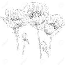 ベクトル カラフルな夏の花の花のイラスト