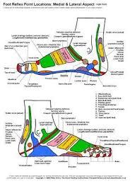 Reiki Foot Chart Reflexology Foot Chart Lateral View Foot Reflexology