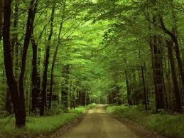 Image result for clipart woods