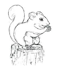 Red Squirrel Coloring Page Coloring Pages Print Coloring