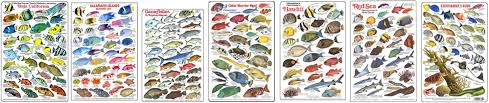 Australian Reef Fish Species Chart 50 Studious Caribbean Fish Chart