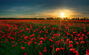 garden flowers. Description: Download Red Flower Garden Flowers S