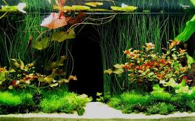 Gallery For Hd Fish Tank Wallpapers Desktop Background