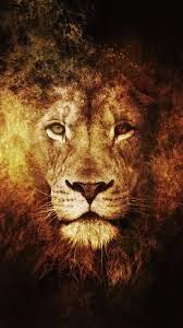Lion Wallpaper Hd Iphone 6 Plus ...