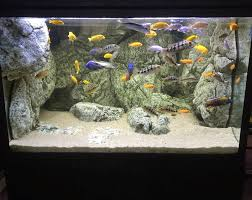 white arstone 3d artificial rocks with cichlids