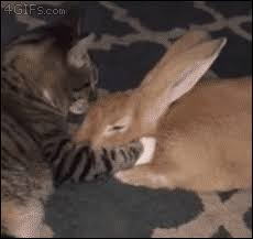 video 4gifs Aww Yiss funny malaysia Massage Scalp 9gag q1I8xnw1C