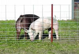 welded wire fence panels. Interesting Fence Two Dogs Are Confined In Welded Wire Fence On Welded Wire Fence Panels