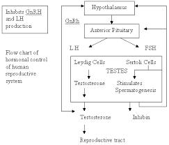 Chapter 4 Hormones And Chromosomes Diagram Quizlet