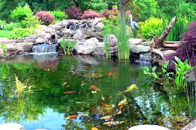 Image result for Pond