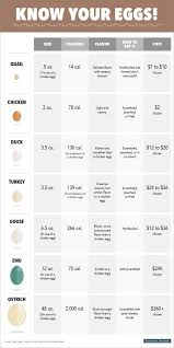 Chicken Sizes Chart This Chart Tells You Everything You Need To Know About Eggs