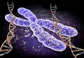 پیوند سلول بنیادی
