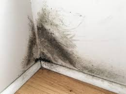 black mold on drywall get rid of it