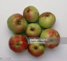 green and red apples. ripe green and red apples stem side up : stock photo