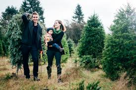 Where To Cut Your Own Christmas Trees In NJChristmas Tree Cutting Nj