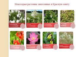 Растения Красной книги России описание с фото особенности  Самые редкие растения занесенные в Красную книгу России