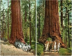 redwoodsolrs