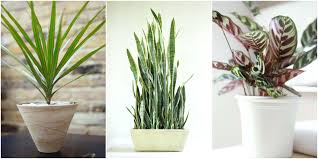 best indoor plants for office. Indoor Office Plants No Light These Low Varieties Wont Want Anything To Do With Your Best For