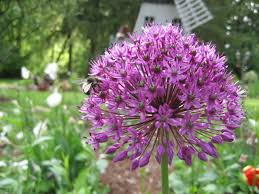 average american flower size flowers plants and shrubs by their common name garden helper
