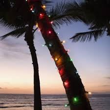 Christmas Comes To Hawaii Wth The Annual Lighting Of The Christmas Christmas Tree Hawaii