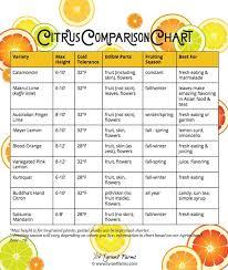 Citrus Comparison Chart How To Grow Citrus In Pots