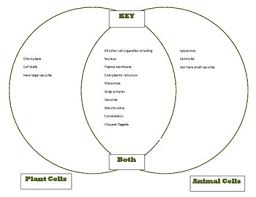 Venn Diagram Plants Venn Diagram Plant Animal Cells Comparison Cells Unit Part 1 Key