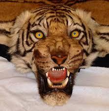 animal rug with head roselawnlutheran fake tiger rug