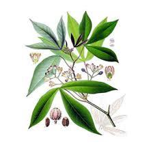 <b>Удобрения для декоративно-лиственных растений</b> | WikiBotanika ...