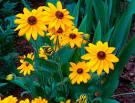 Напиши рассказ об одном из растений осеннего цветника о связанных