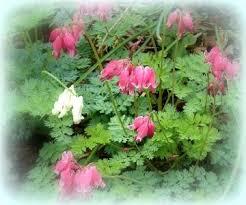 Small Picture Garden Design Garden Design With Backyard Flower Garden Designs