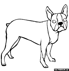Small Picture Boston Terrier Coloring Page Free Boston Terrier Online Coloring