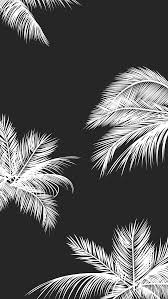 Black White Palm Leaves Palm Trees Achtergrond Shit