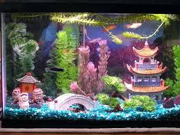 aquarium decoration ideas aquarium decor aquarium decoration ideas diy