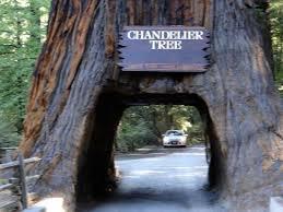 chandelier drive through tree chandelier tree