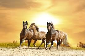 horses wallpaper hd. Beautiful Wallpaper Wild Horse Wallpaper 7008x4672 For Horses Hd