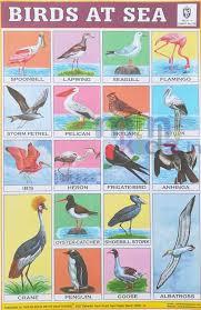 Birds Chart For Kindergarten Birds At Sea Chart Number 219 Minikids In
