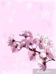 Wall Mural Vinyl Cherry Blossom Background