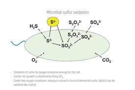 Microbial Sulfide Removal Water Tech Online