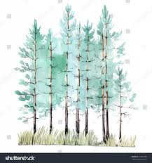 watercolor painting of young pine tree wood isolated on white background vector ilration