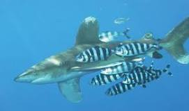 Image result for examples of commensalism in nature