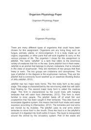 bio essay bio essays examples of biography essays examples of biographical domwl argumentative essay tips film studies essay