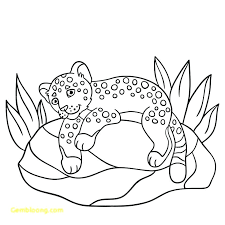 Cute Animals Coloring Pages Printable Animal Colouring Winning Adult