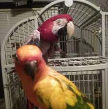 Addie and Ruby, the rescue birds - Posts | Facebook