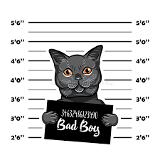 Cat Height Chart Police Height Chart Stock Illustrations 133 Police Height